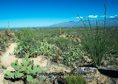 Saguaro National Park - Rincon District