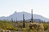 Sonoran desert landscape.