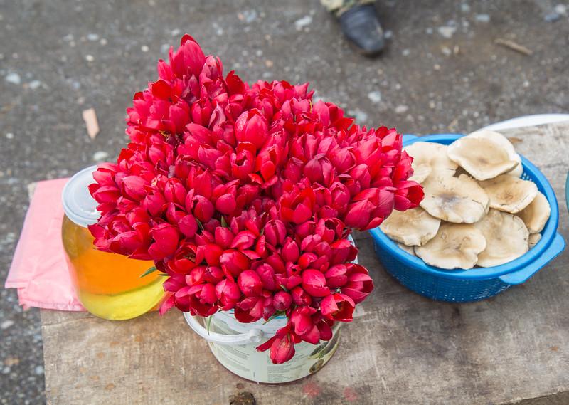 Tulipa julia,  honey and mushrooms