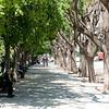 Athens, beautiful row of trees