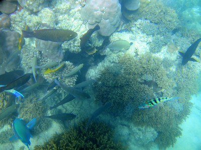 Australia 2011 - Cairns: Tablelands, Great Barrier Reef, Cape Tribulation