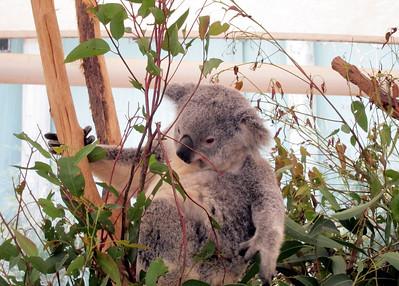 Australia 2011 - Back to Brisbane & Aussie Animals
