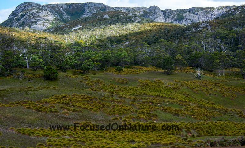 Fields of buttongrass