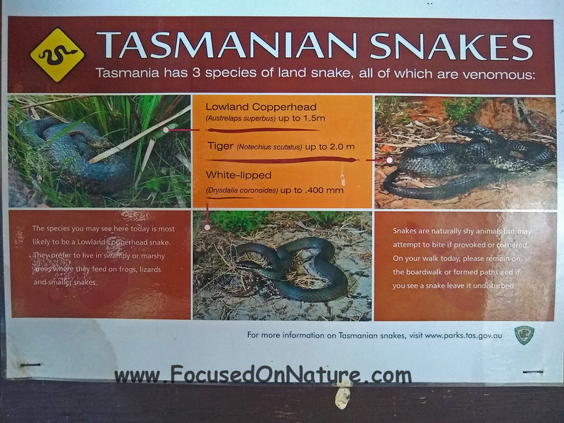 2 of the top 15 most venomous snakes in the world