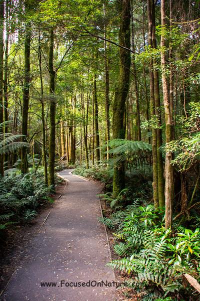Forest around Nelson Falls