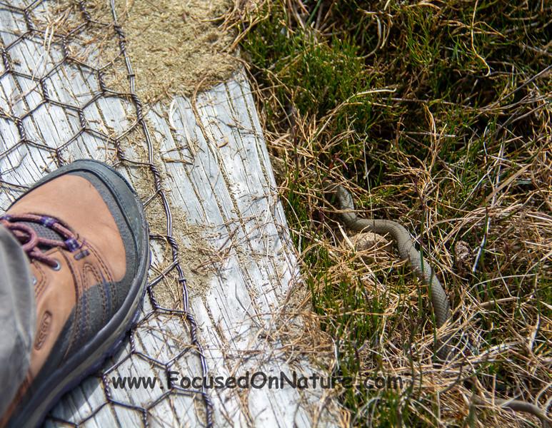 Venomous snake near Karen's foot