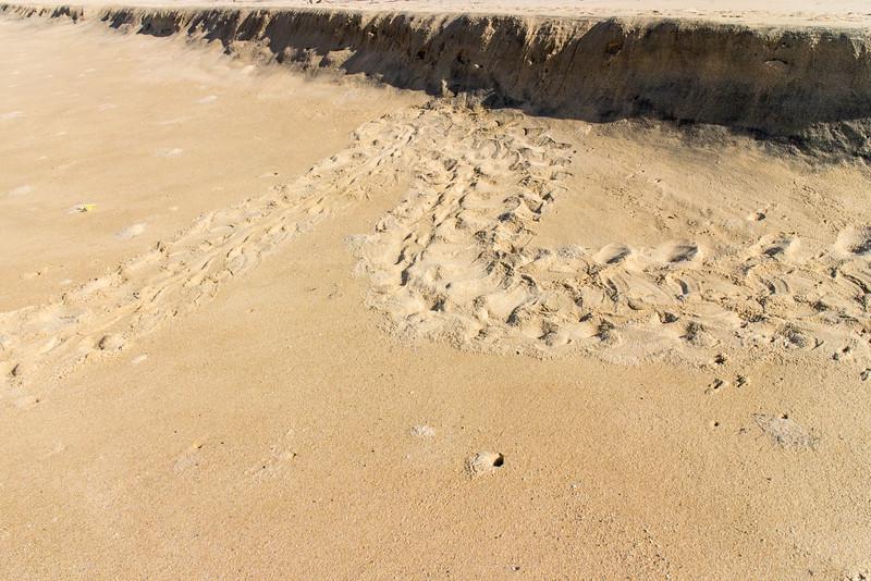 Turtle Tracks on the beach near Pescadero