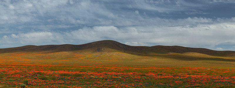 Spring in Antelope Valley