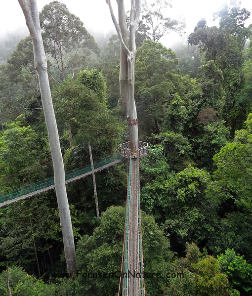 Canopy Walkway (Closed Area)