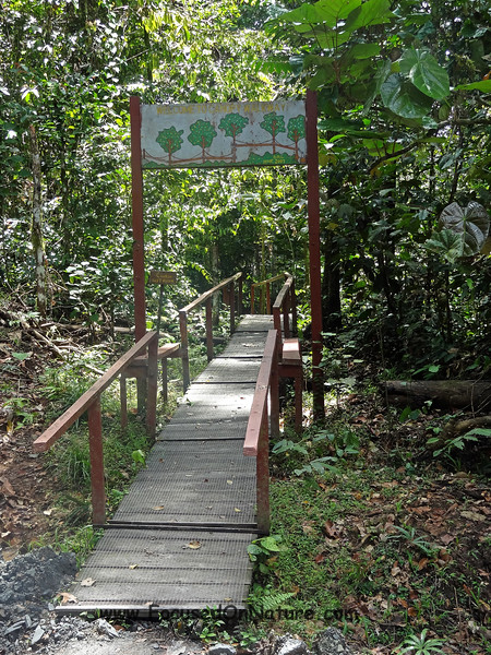 Canopy Walkway Entrance