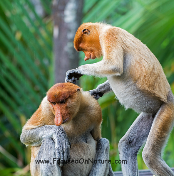 Grooming Session