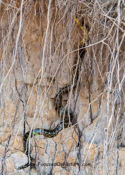 Climbing Anaconda