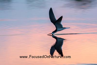 Skimming at Sunset