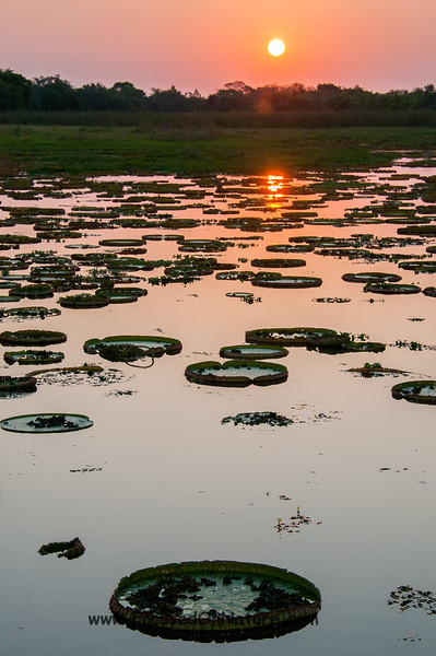 Another Pantanal Sunset