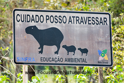 Capybara Crossing