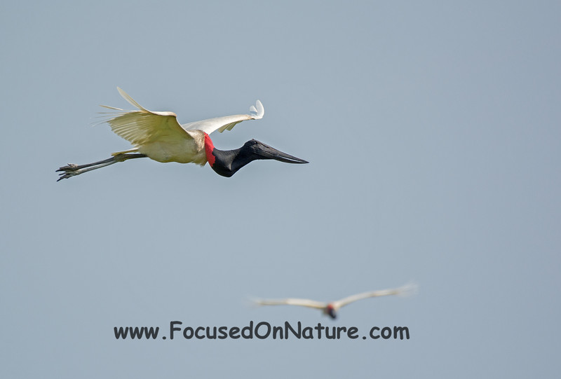 Jabiru Flying