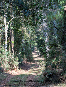 Bacury Atlantic Forest