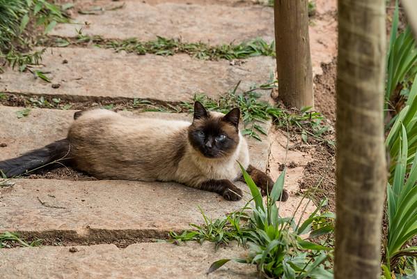 9-6-16 Olivia the Cat - Brazil-0221