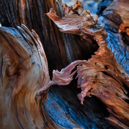 Bristlecone Log Detail