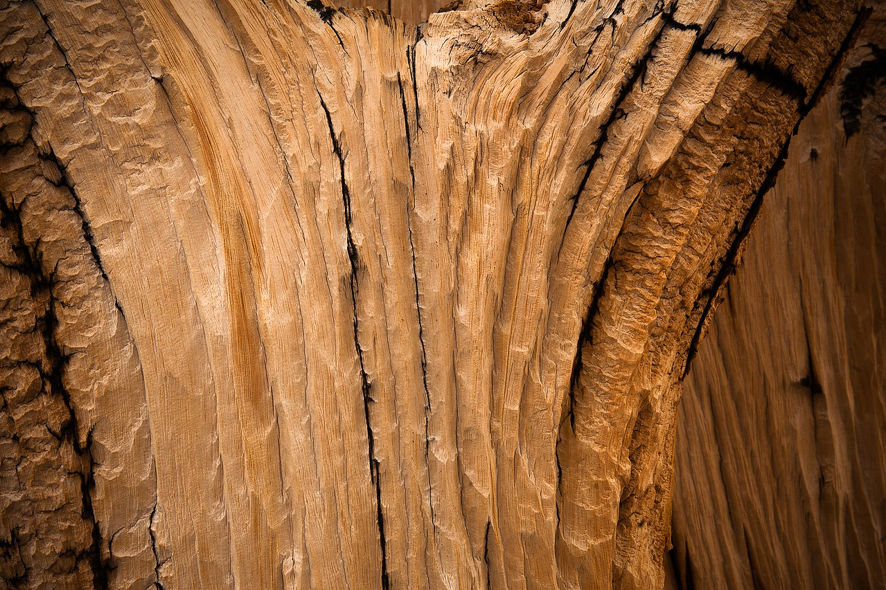 Bristlecone Trunk Detail