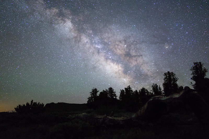 Milky Way Over the Ancient Bristlecone Forest