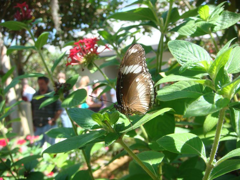 Butterfly World 004