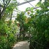 Butterfly World 2010