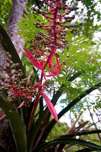 Tikal orchid.