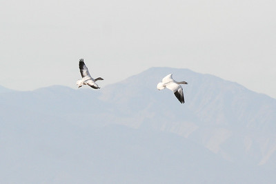 2012_01 Salton Sea