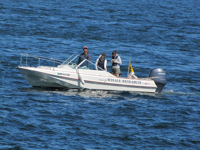 boat of the Whale Research Center (San Juan Archipelago USA-Canadian border)