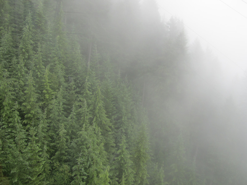 Foggy weather at Grouse Mountain, one of the living areas of the Grizzly Bear, North of Vancouver, Canada