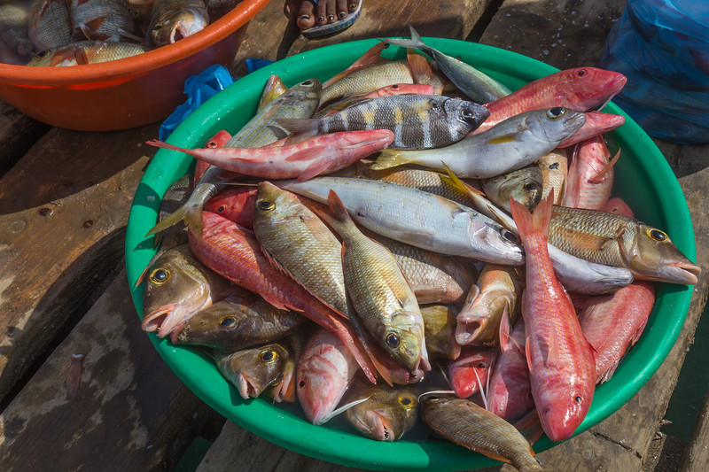 fresh fish sales with the red Lutjanus agennes