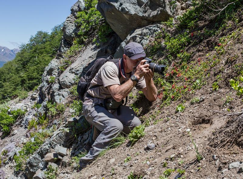 Marijn photographing Ourisia ruellioides
