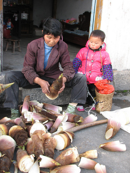 Bamboo shoots, Hongcun, (Unesco World Heritage Site)