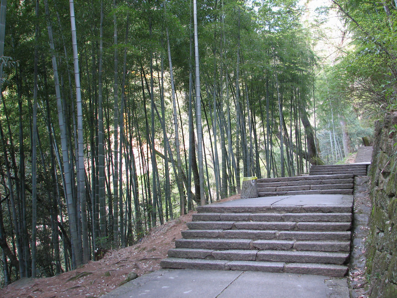 bamboos along the path, near our hotel, Natonal Park Huangshan, Anhui, East China