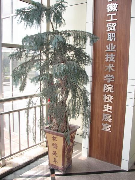 Bonsai, ICVC, Huainan