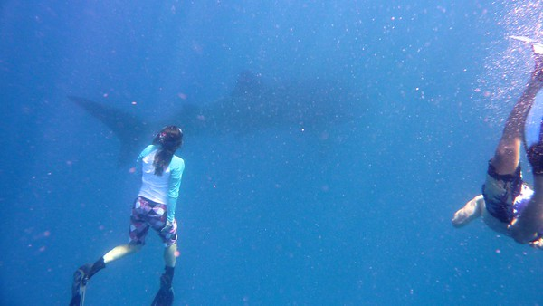 Julie and a whale shark
