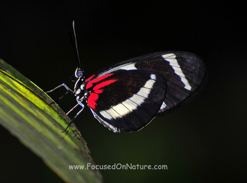 Butterfly-L.jpg