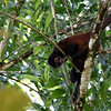 Spider-Monkey_Corcovado_CostaRica-1254