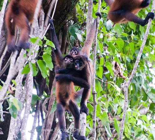Spder Monkeys Messing Around