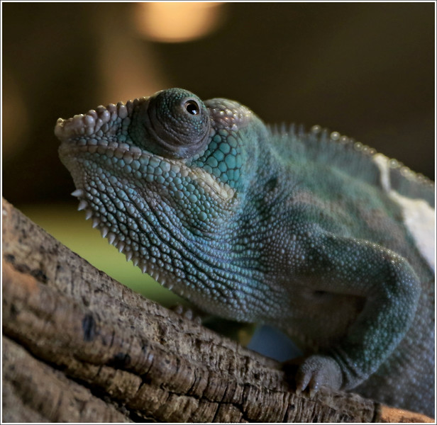 Unedited shot (through glass wall), taken at Reptile house De Aarde, Breda NL