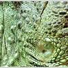 Unedited shot (through glass wall), taken at Reptile house De Aarde, Breda NL