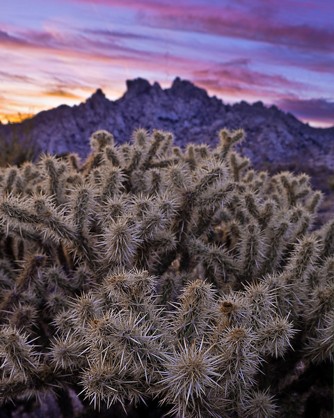 <em>Cactus Sunset</em> Copyright 2009 Ken Walsh