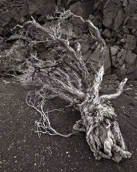 <em>Dead Wood</em> Copyright 2009 Ken Walsh