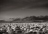 <em>Darwin Plateau</em> Copyright 2012 Ken Walsh