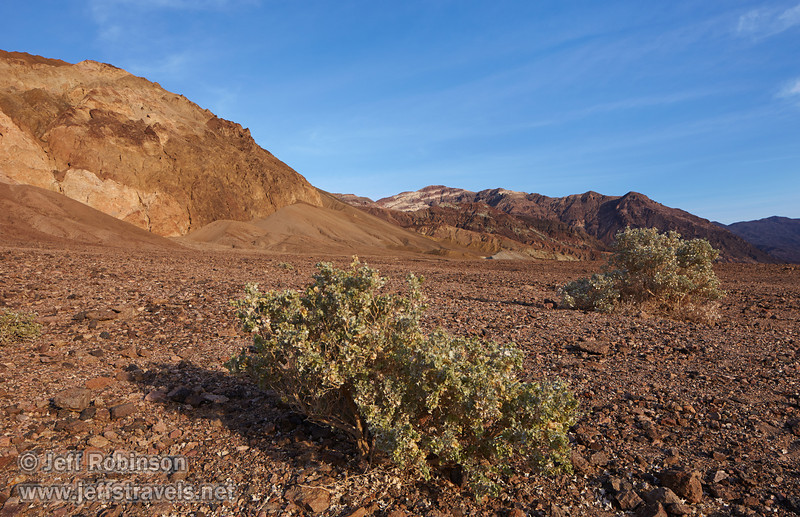 Light green bushes in the foreground with mountains with multiple colors of reds, browns, yellows, and faint greens in the background under partly-cloudy blue sky.(3/17/2013, Artists Drive Loop, Death Valley NP)<br /> <br /> TS-E24mm f/3.5L II @ 24mm f/8 1/250s ISO200
