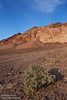 Light green bushes in the foreground with mountains with multiple colors of reds and browns in the background under partly-cloudy blue sky.(3/17/2013, Artists Drive Loop, Death Valley NP)<br /> <br /> TS-E24mm f/3.5L II @ 24mm f/8 1/250s ISO250
