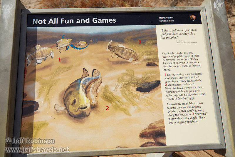 """""""Not All Fun and Games"""" sign describing the behaviors of pupfish. (3/19/2013, Salt Creek Trail, Death Valley NP)<br /> EF24-105mm f/4L IS USM @ 24mm f/8 1/500s ISO200"""