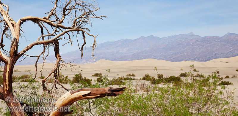 The Mesquite Dunes and mountains beyond at midday, with dead wood in the foreground. (3/19/2013, Mesquite Flat Sand Dunes, Death Valley NP)<br /> EF24-105mm f/4L IS USM @ 73mm f/13 1/250s ISO200