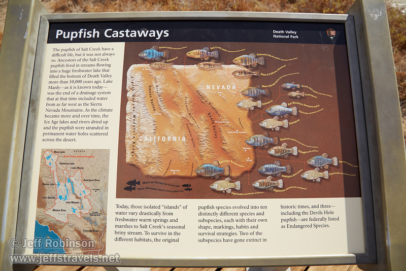 """Pupfish Castaways"" sign describing the different species of Pupfish in California, including where they are located. (3/19/2013, Salt Creek Trail, Death Valley NP)<br /> EF24-105mm f/4L IS USM @ 24mm f/8 1/400s ISO200"